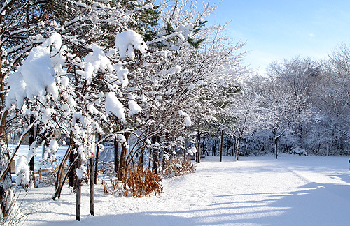 13.11.28雪景色02.jpg
