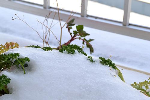 13.11,12雪004.jpg