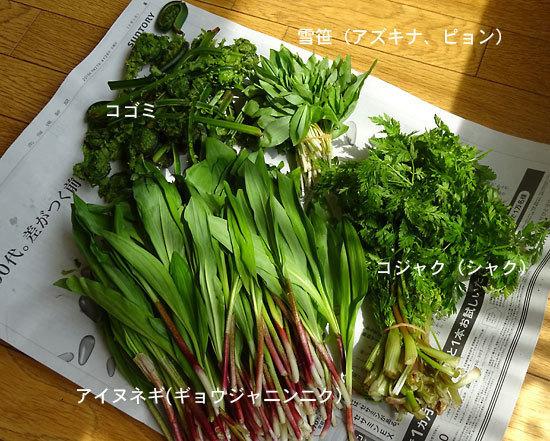 150429山菜2.jpg