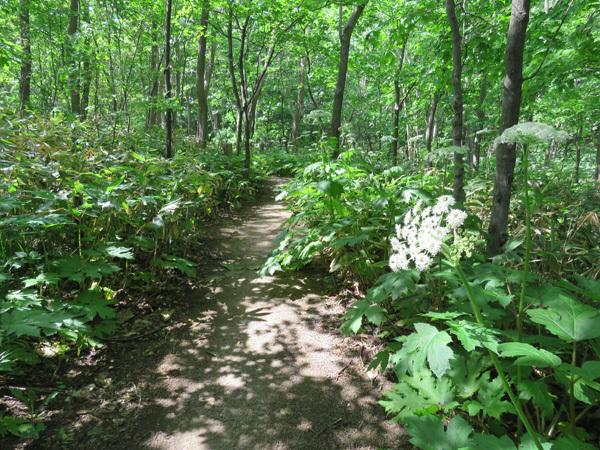 160530林のようす01.jpg