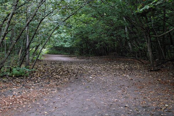 苔の同門4165-1.jpg