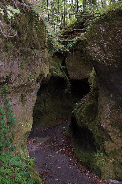 苔の同門4181.jpg