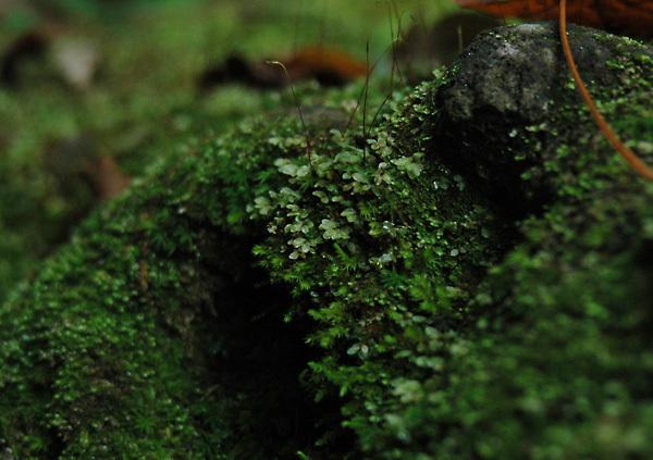 苔の同門_4201.jpg