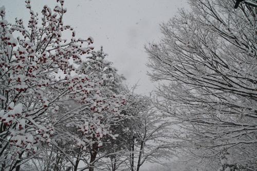 13.12.31雪002.jpg