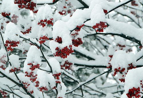 13.12.31雪003.jpg