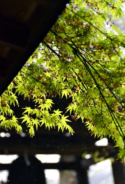 15.4.13鎌倉杉本寺0013.jpg