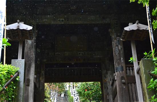 15.4.13鎌倉杉本寺0016.jpg