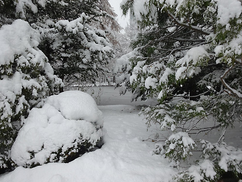 151124雪007.jpg
