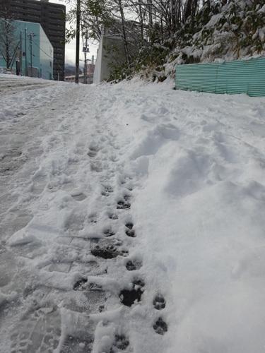 151125雪008.jpg