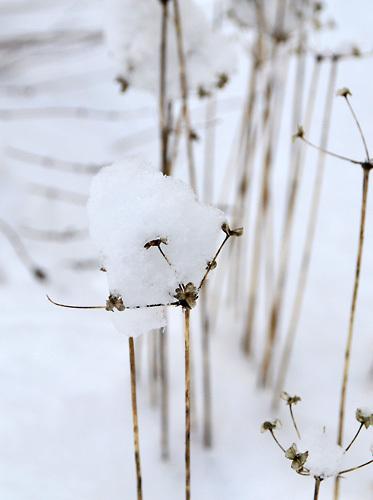 151218雪001.jpg
