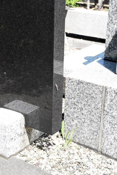 160810みの虫-お墓01.jpg