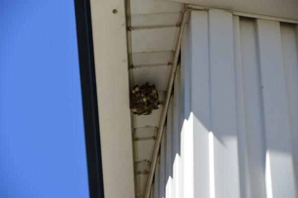 160827蜂の巣001.jpg
