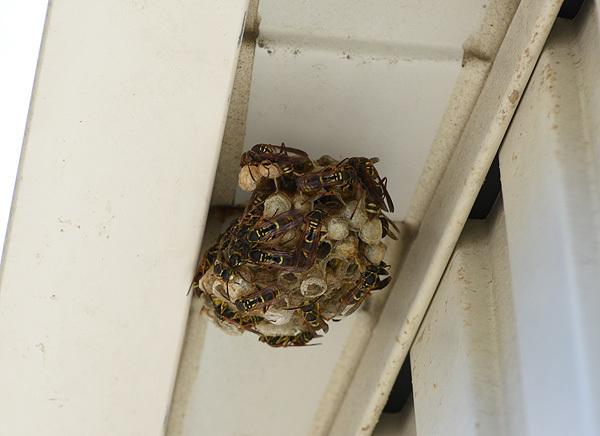 160827蜂の巣002.jpg