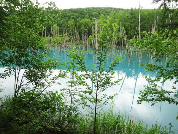 青い池8203.jpg